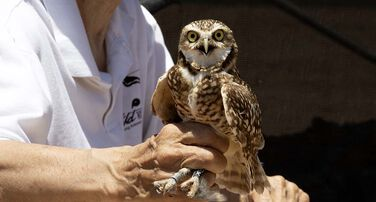 Burrowing Owl Conservation Project
